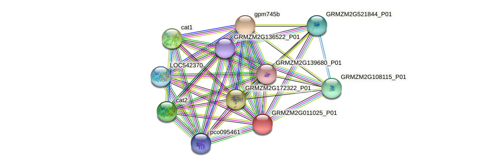 GRMZM2G011025_P01 protein (Zea mays) - STRING interaction network