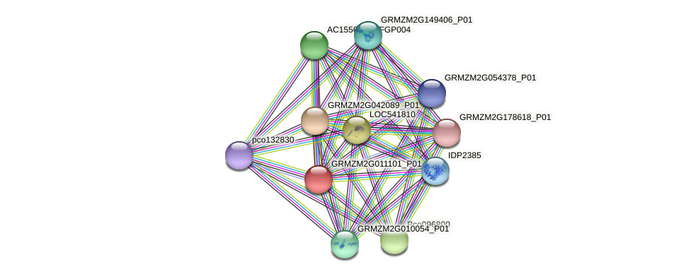 GRMZM2G011101_P01 protein (Zea mays) - STRING interaction network