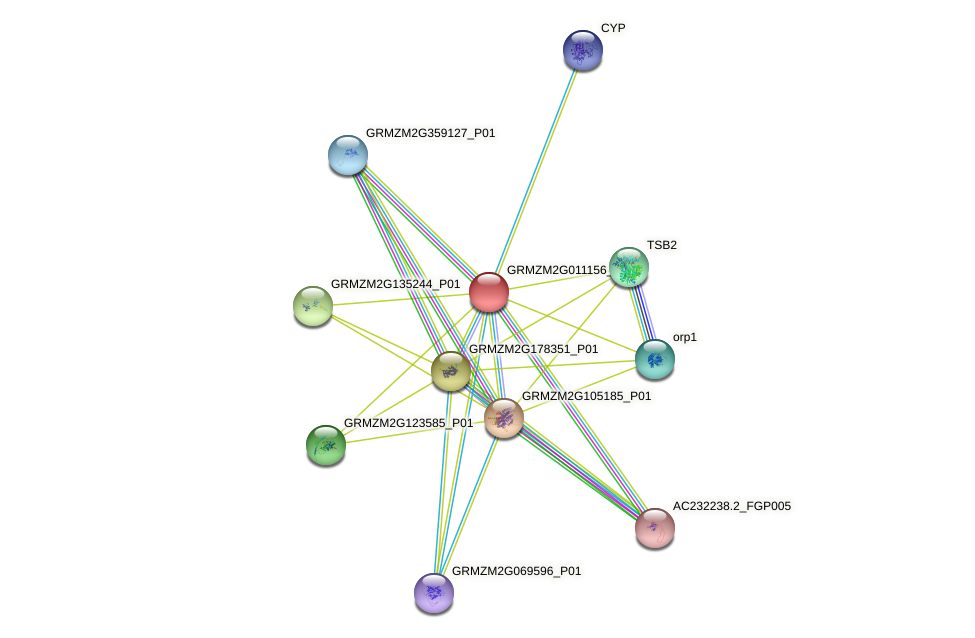 GRMZM2G011156_P01 protein (Zea mays) - STRING interaction network