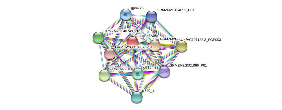 GRMZM2G011303_P01 protein (Zea mays) - STRING interaction network