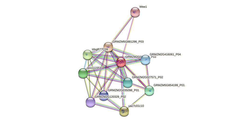 GRMZM2G011456_P03 protein (Zea mays) - STRING interaction network