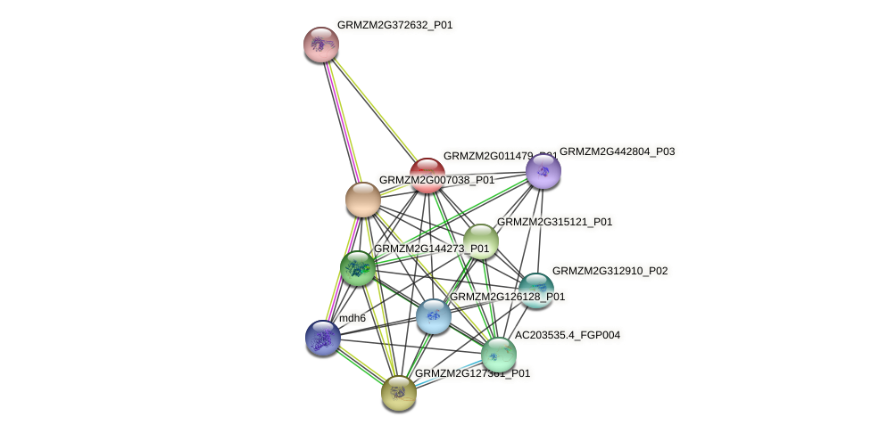 Zm.99456 protein (Zea mays) - STRING interaction network