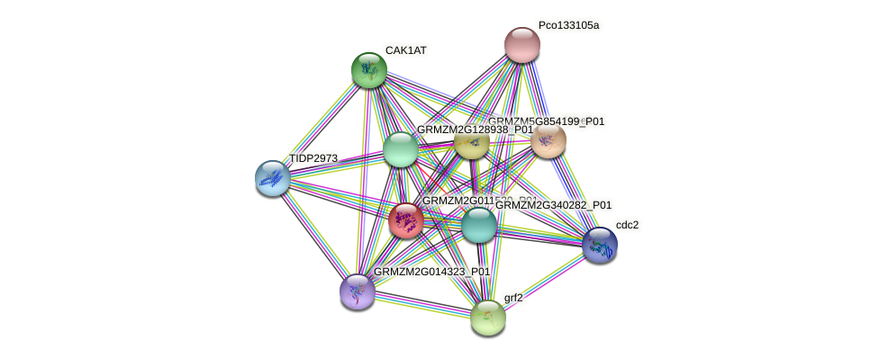 Zm.131862 protein (Zea mays) - STRING interaction network