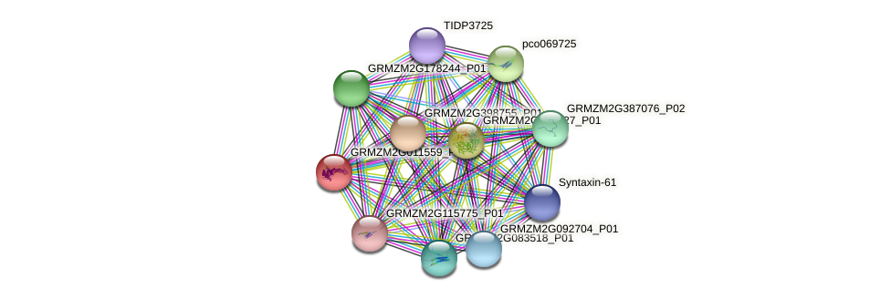 GRMZM2G011559_P01 protein (Zea mays) - STRING interaction network