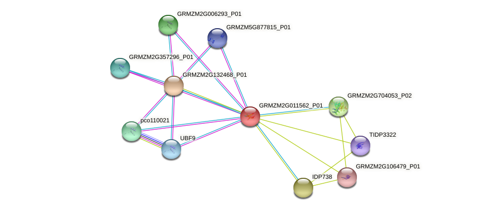 GRMZM2G011562_P01 protein (Zea mays) - STRING interaction network