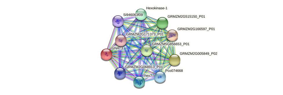 GNAT3 protein (Zea mays) - STRING interaction network