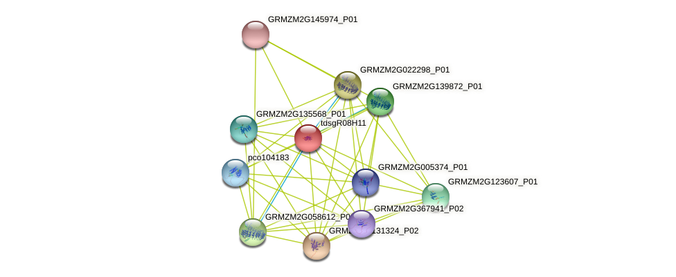 GRMZM2G011627_P01 protein (Zea mays) - STRING interaction network