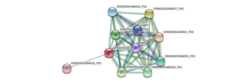 GRMZM2G011655_P01 protein (Zea mays) - STRING interaction network