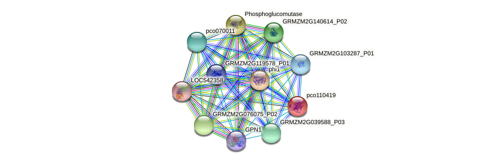 pco110419 protein (Zea mays) - STRING interaction network