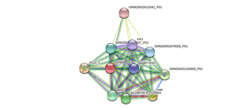 IDP808 protein (Zea mays) - STRING interaction network