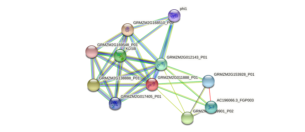 GRMZM2G011888_P01 protein (Zea mays) - STRING interaction network