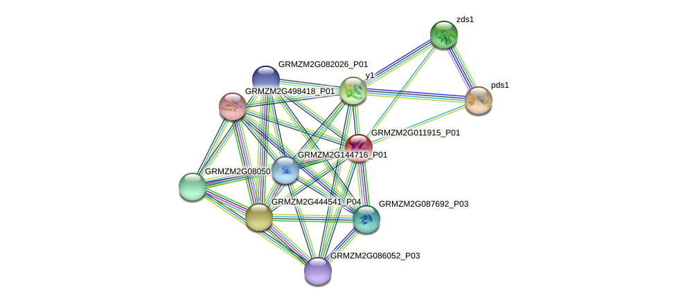 GRMZM2G011915_P01 protein (Zea mays) - STRING interaction network