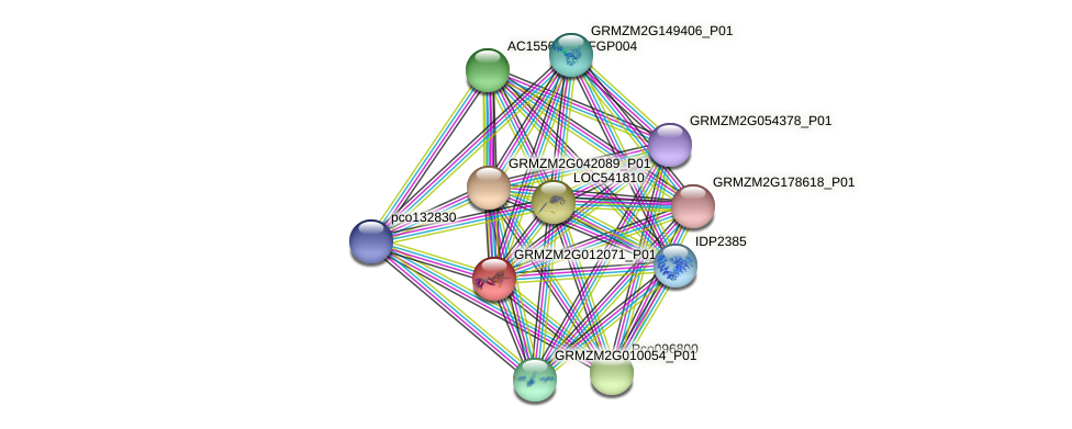 GRMZM2G012071_P01 protein (Zea mays) - STRING interaction network