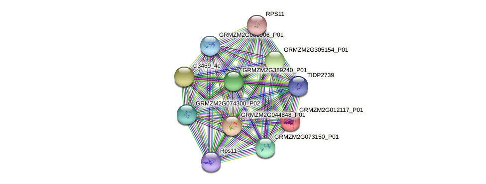 GRMZM2G012117_P01 protein (Zea mays) - STRING interaction network