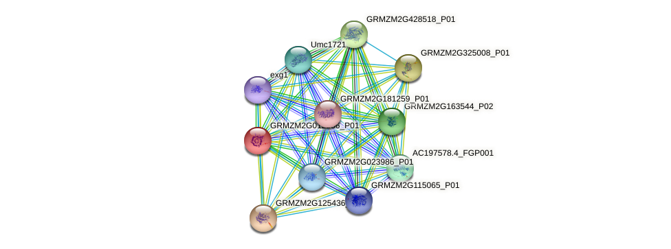 GRMZM2G012236_P01 protein (Zea mays) - STRING interaction network