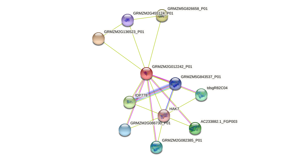 GRMZM2G012242_P01 protein (Zea mays) - STRING interaction network