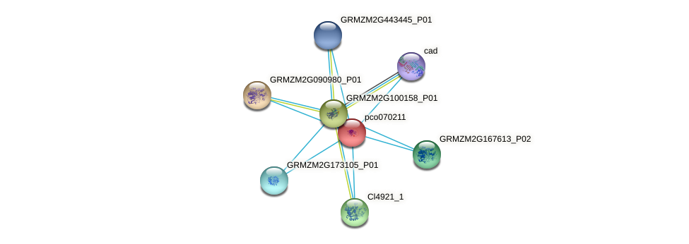 pco070211 protein (Zea mays) - STRING interaction network