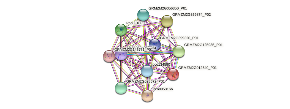 GRMZM2G012340_P01 protein (Zea mays) - STRING interaction network