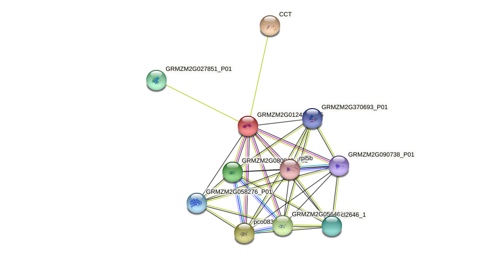 GRMZM2G012416_P05 protein (Zea mays) - STRING interaction network