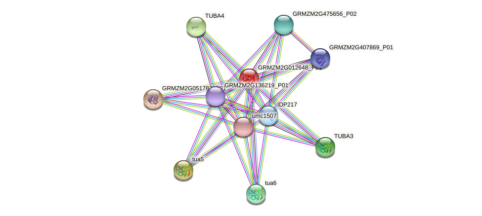 GRMZM2G012648_P01 protein (Zea mays) - STRING interaction network