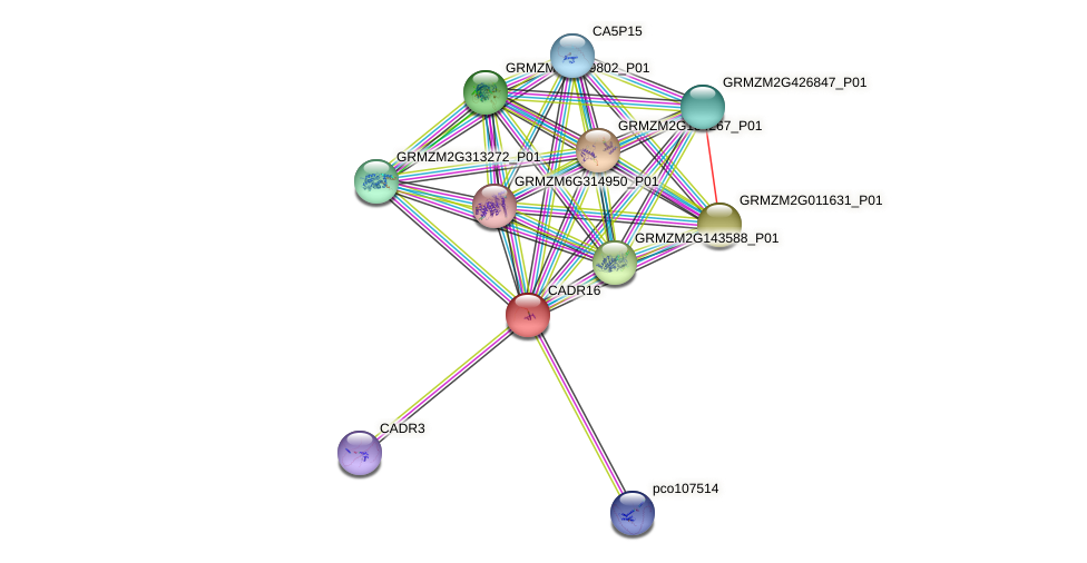 CADR16 protein (Zea mays) - STRING interaction network