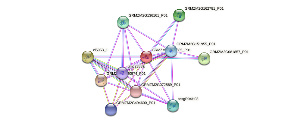 GRMZM2G012685_P01 protein (Zea mays) - STRING interaction network