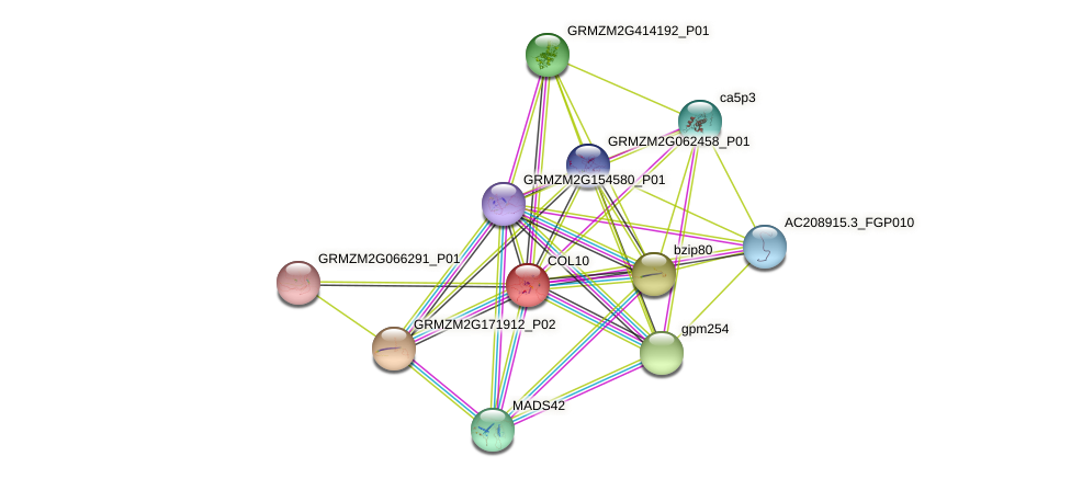 COL10 protein (Zea mays) - STRING interaction network