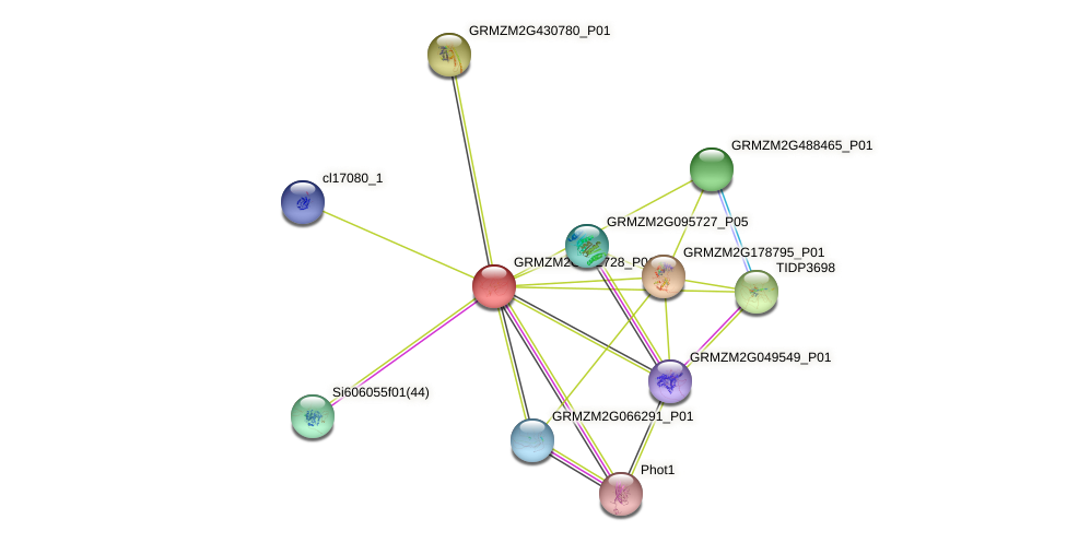 Zm.140730 protein (Zea mays) - STRING interaction network