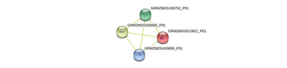 Zm.131499 protein (Zea mays) - STRING interaction network