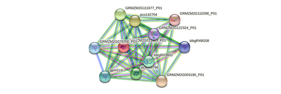 GRMZM2G012863_P01 protein (Zea mays) - STRING interaction network