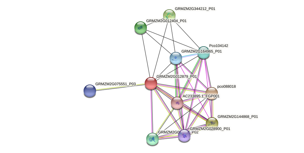 GRMZM2G012879_P01 protein (Zea mays) - STRING interaction network