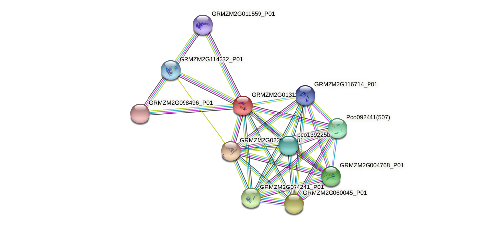 GRMZM2G013115_P02 protein (Zea mays) - STRING interaction network