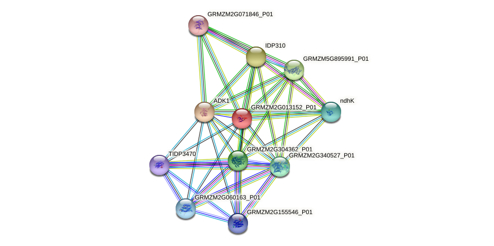 GRMZM2G013152_P01 protein (Zea mays) - STRING interaction network