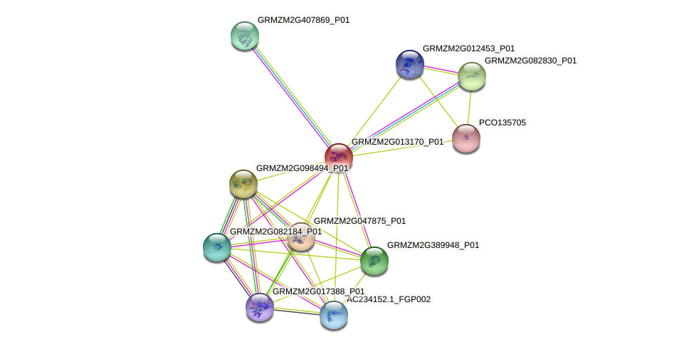 GRMZM2G013170_P01 protein (Zea mays) - STRING interaction network
