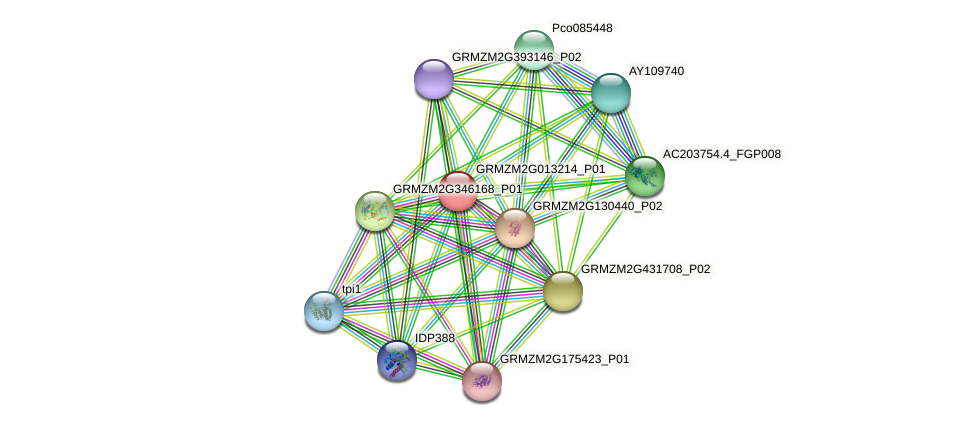 GRMZM2G013214_P01 protein (Zea mays) - STRING interaction network