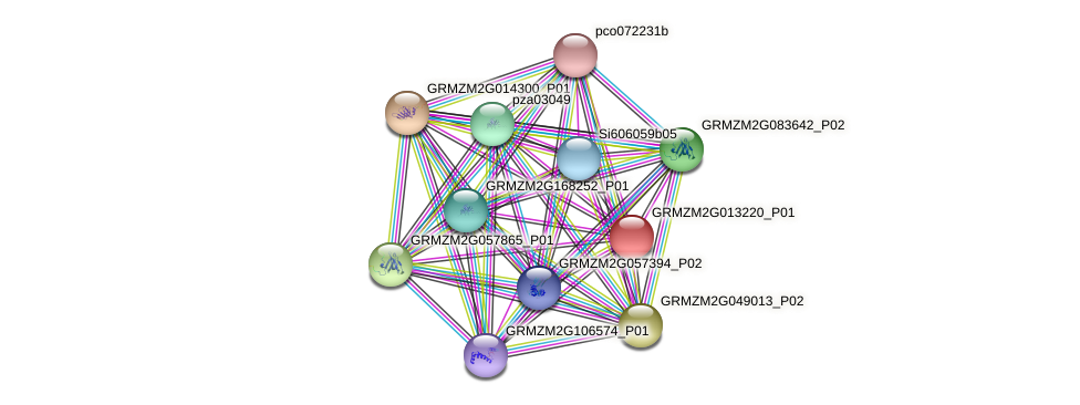 GRMZM2G013220_P01 protein (Zea mays) - STRING interaction network