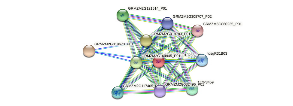 GRMZM2G013255_P01 protein (Zea mays) - STRING interaction network