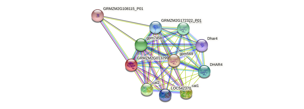 GRMZM2G013299_P01 protein (Zea mays) - STRING interaction network
