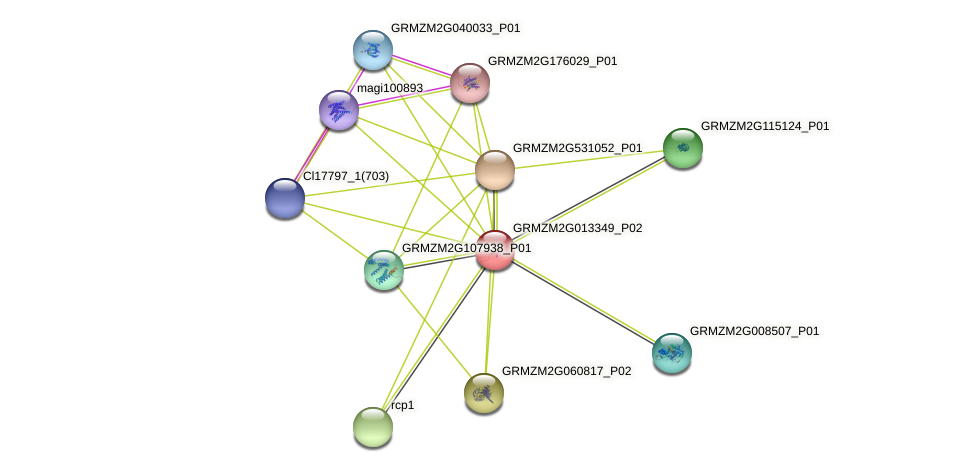 GRMZM2G013349_P02 protein (Zea mays) - STRING interaction network