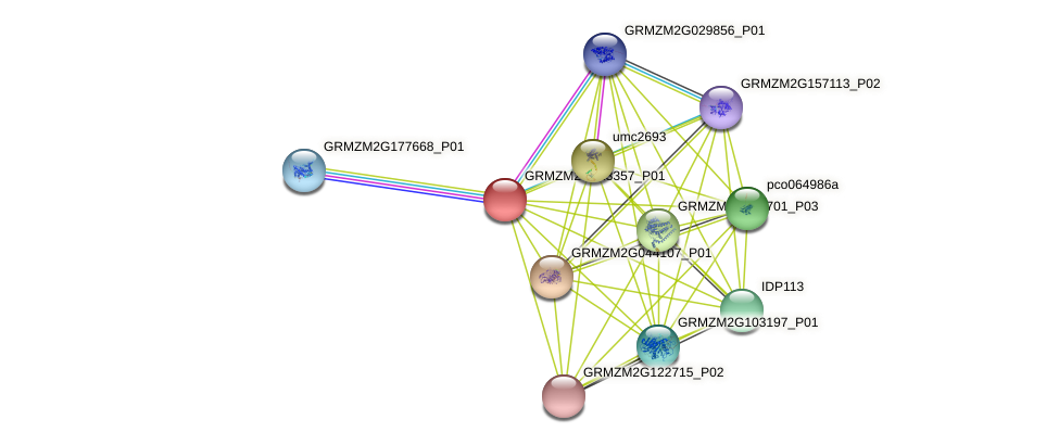 GRMZM2G013357_P01 protein (Zea mays) - STRING interaction network