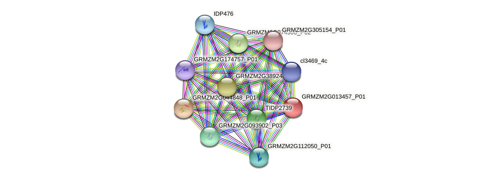 GRMZM2G013457_P01 protein (Zea mays) - STRING interaction network