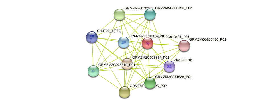 GRMZM2G013481_P01 protein (Zea mays) - STRING interaction network