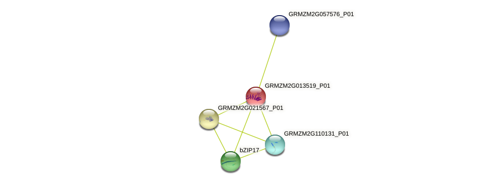 GRMZM2G013519_P01 protein (Zea mays) - STRING interaction network
