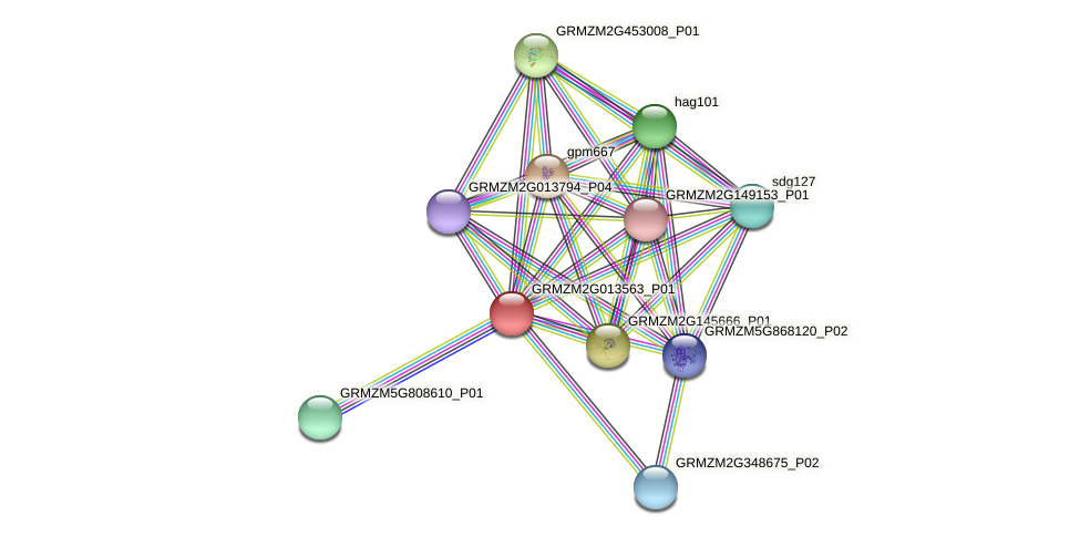 GRMZM2G013563_P01 protein (Zea mays) - STRING interaction network