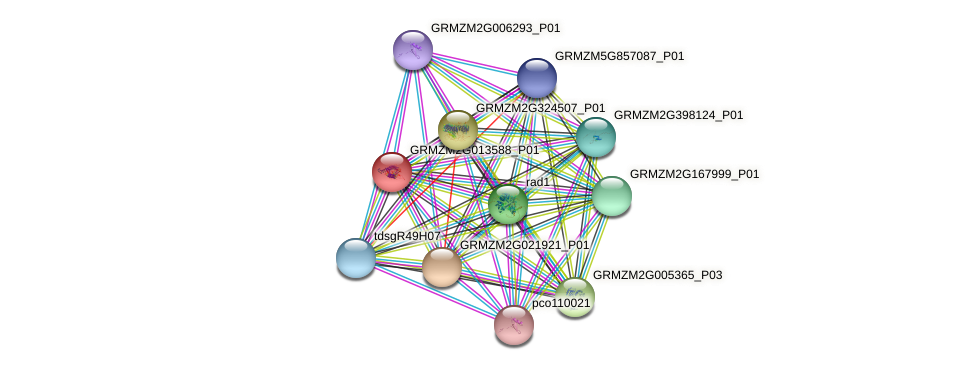 Zm.134275 protein (Zea mays) - STRING interaction network