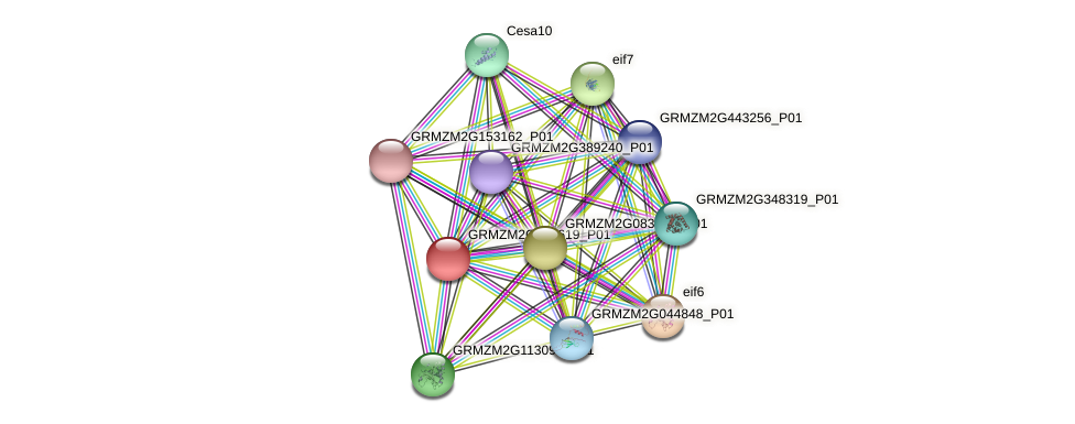 GRMZM2G013619_P01 protein (Zea mays) - STRING interaction network