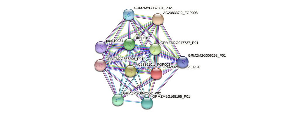 GRMZM2G013625_P04 protein (Zea mays) - STRING interaction network