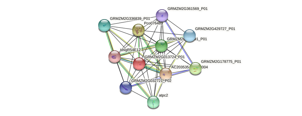 GRMZM2G013724_P01 protein (Zea mays) - STRING interaction network