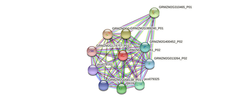 GRMZM2G013761_P02 protein (Zea mays) - STRING interaction network