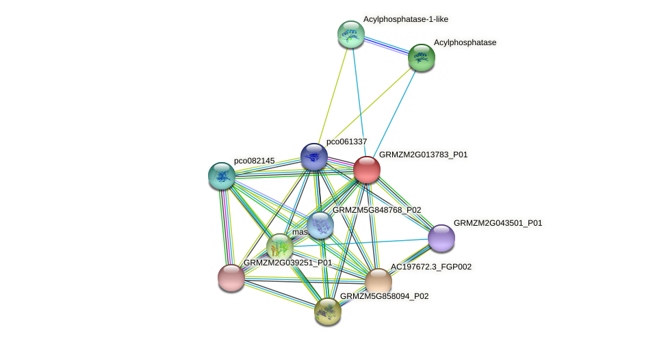 GRMZM2G013783_P01 protein (Zea mays) - STRING interaction network
